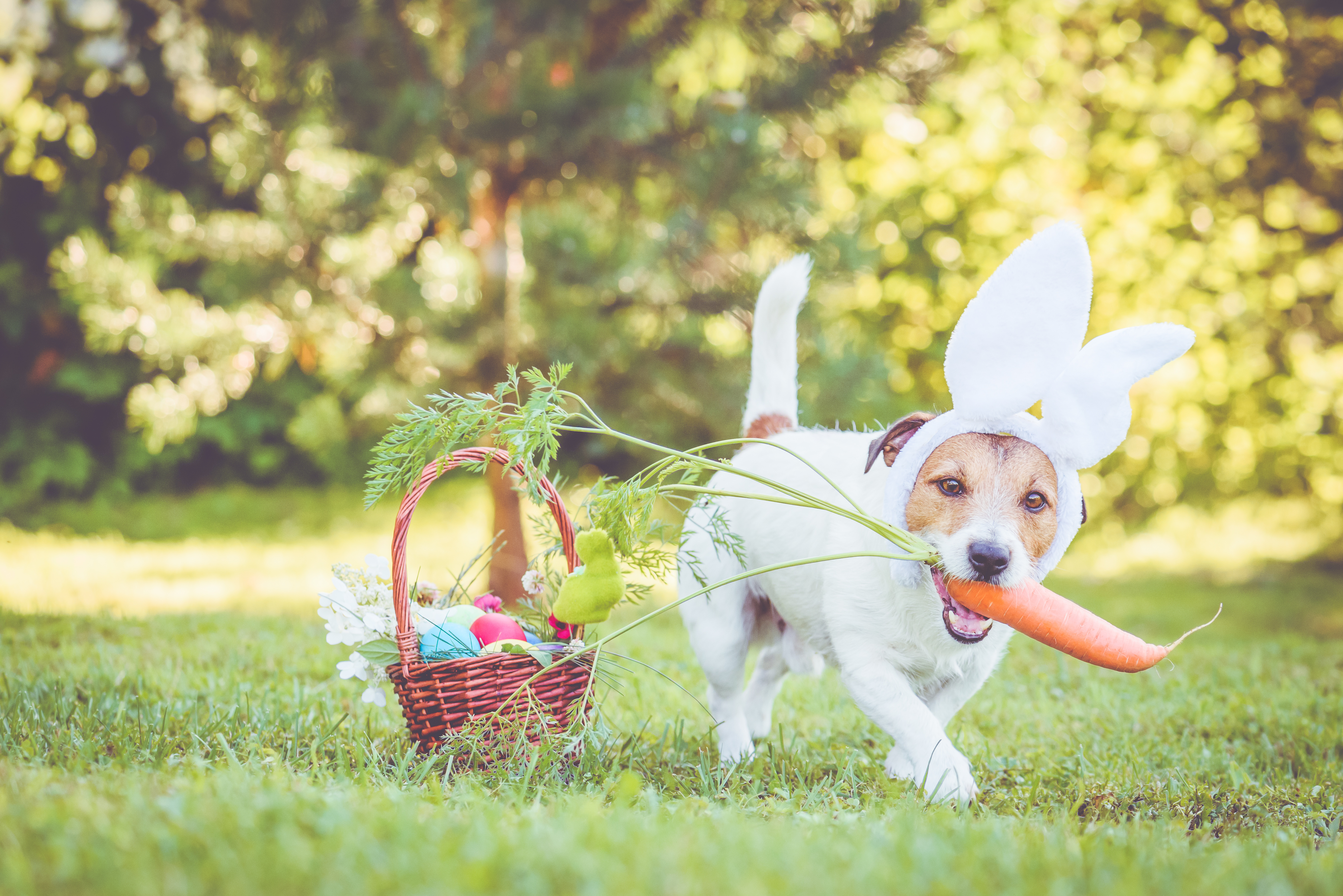 Easter Egg Hunt for Dogs and Their Owners Coming to Norfolk