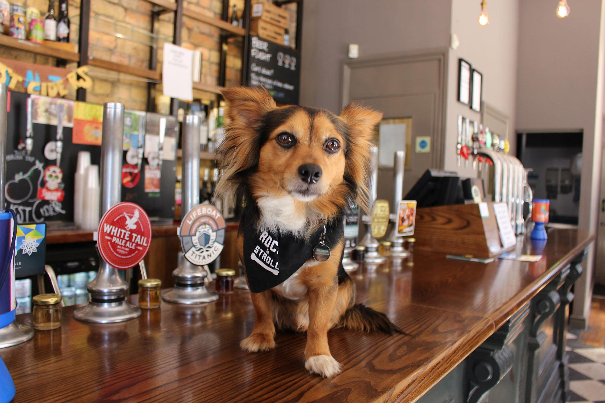Wales' First Dog Friendly Pub Crawl is coming to Cardiff