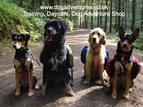 The Dog Adventure Company