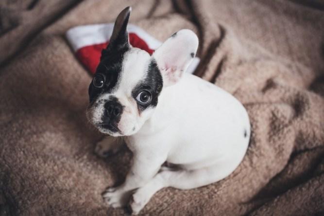 Cute Dog Staring At Camera