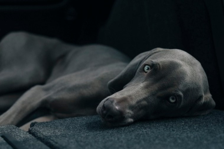 Sad Dog Laying Down