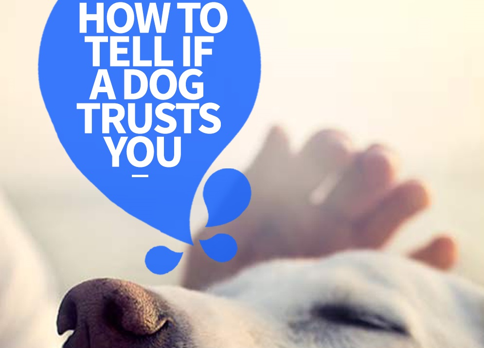 how to tell if a dog trusts you