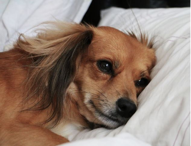 why your dog should sleep in your bed