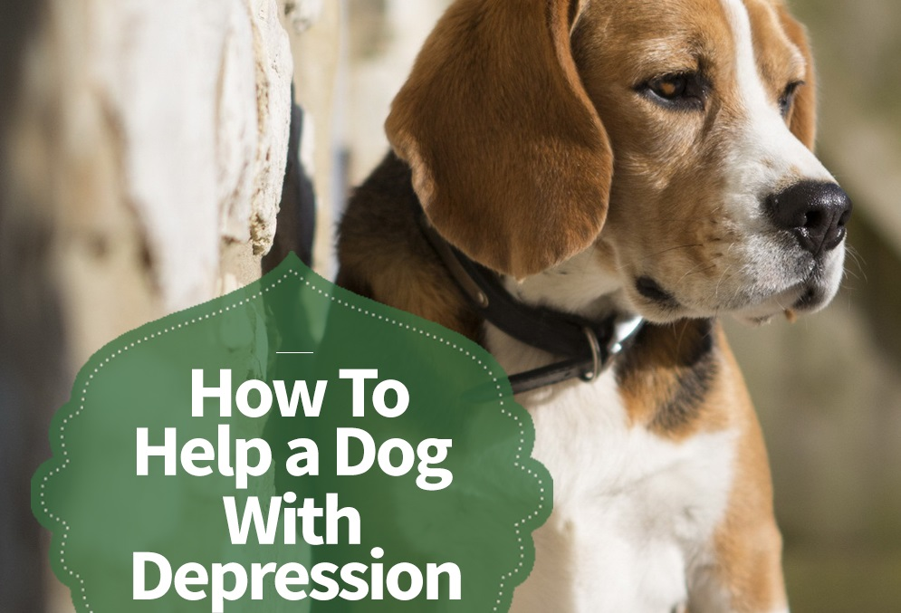 how to help a dog with depression