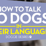 How to Talk to Dogs in their Language
