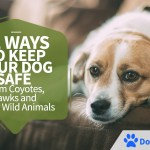 12 Ways To Keep Your Dog Safe From Coyotes, Hawks And Other Wild Animals