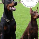 Dog  Training Goals  And Training Plan, The Basics