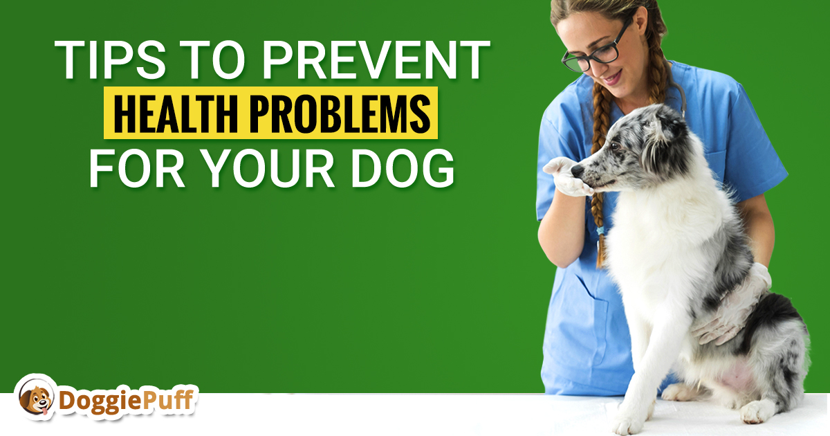 Tips to Prevent Health Problems For Your Dog