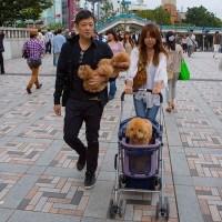Dog walking near Meiji Shrine