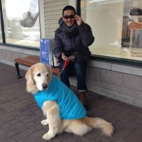 It is cold in Japan–even for retrievers