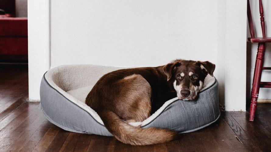 11 best indestructible dog beds in 2021