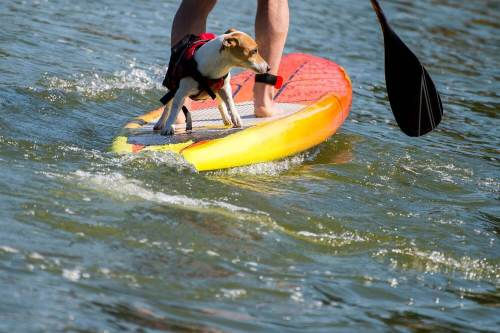 8 Dog Friendly Activities In Austin Tx That Your Pup Will Love