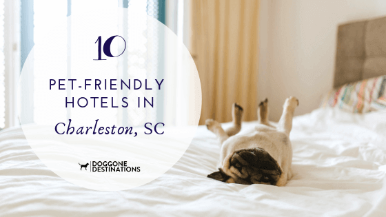 10 Of The Most Pet Friendly Hotels In Charleston Sc