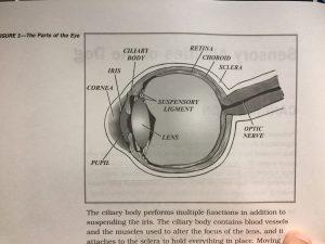 Eye Parts