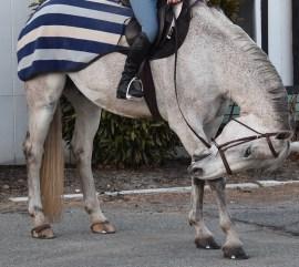 NAYmaste- Horse assisted Yoga!