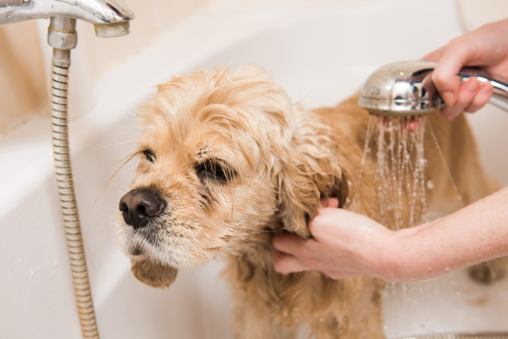 Dog Grooming and Behavioural Issues - Dog Grooming Hobart