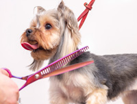 dog grooming styling