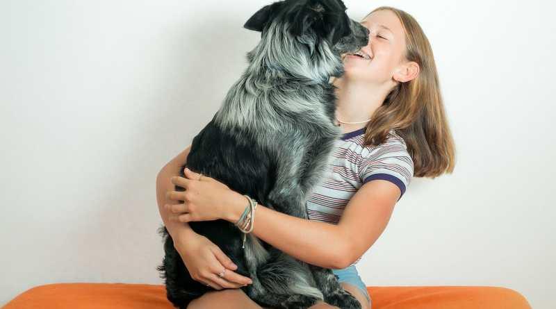 Zuneigung von Hunden