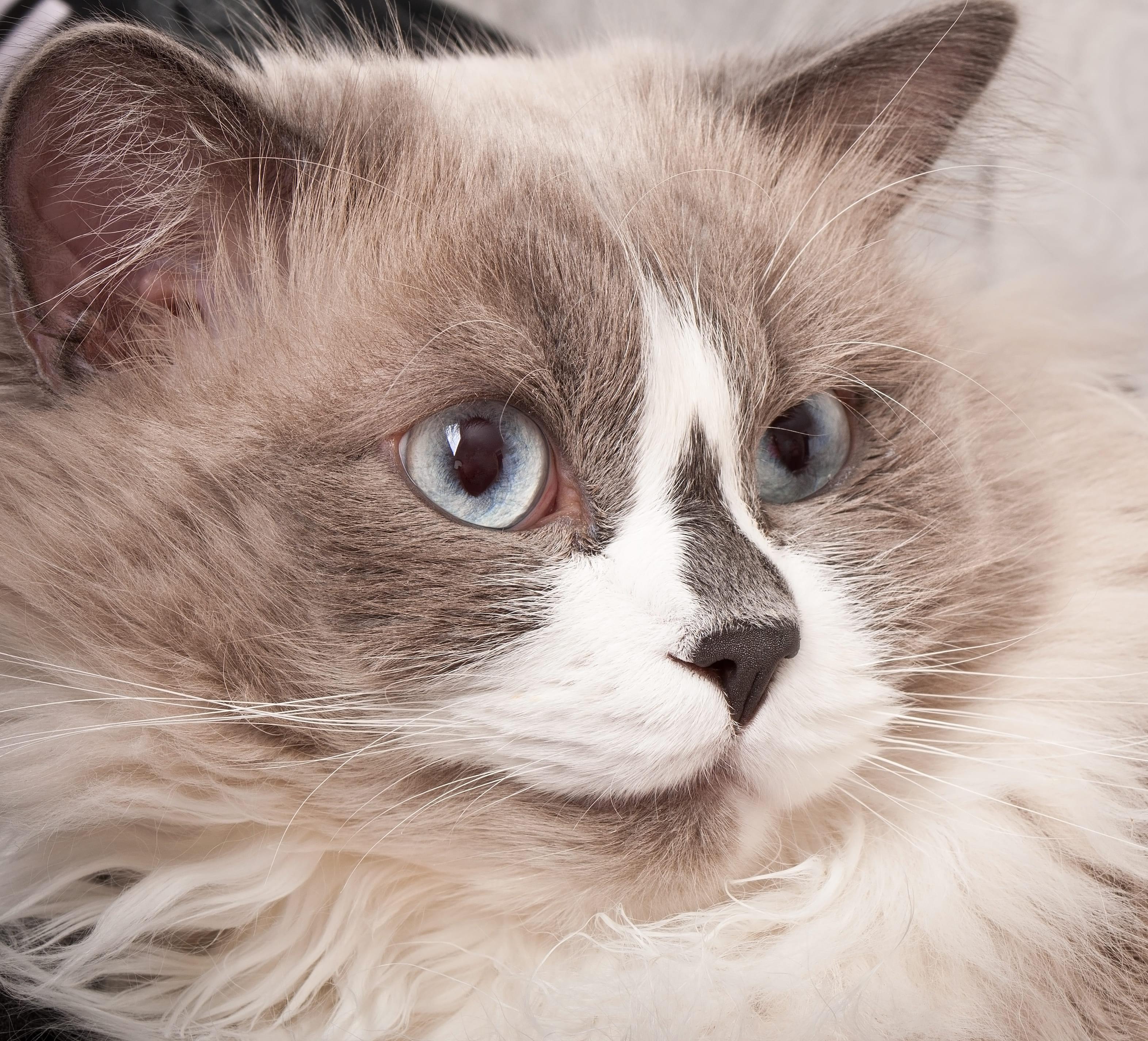 ¿Cuánta proteína debe consumir mi gato?