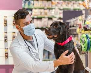 escoger veterinario