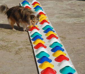 Doggywall le mur d'odeurs de Doggycoach