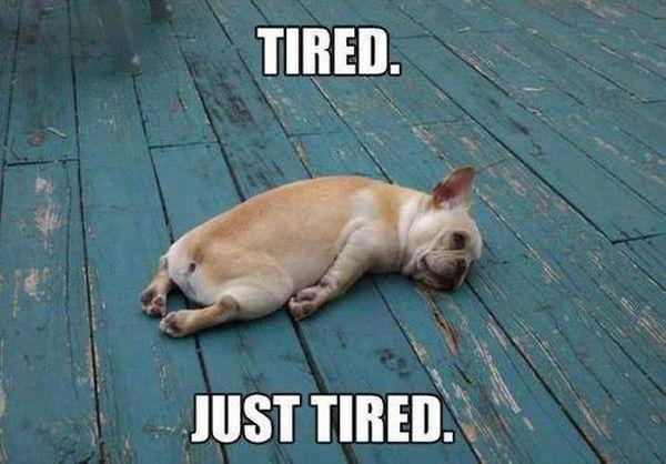 https://i1.wp.com/doghumor.net/wp-content/uploads/2014/05/dog-humor-funny-just-tired-puppy.jpg