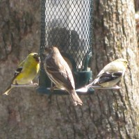 Green Healing ~ The Feeder