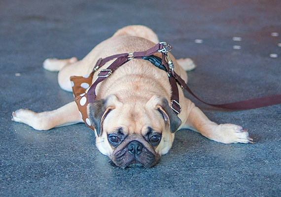 14 Tricks To Stop Your Dog Slipping And Sliding On Hard Floors | Dog Slipping On Wood Stairs | Steps | Hardwood Floors | Self Adhering | Hardwood | Puppy Treads