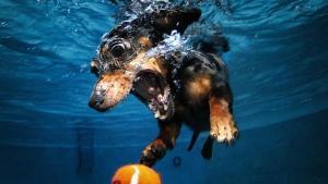 Dogs Underwater Stills 2