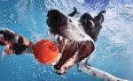 Dogs Underwater Stills 8