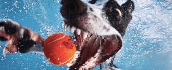Dogs Underwater Photos Gallery-2
