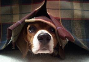 Dog Noise Training - Fear of Thunder & Loud Noises - Doglers