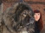 Top 10 Big Dog Breeds