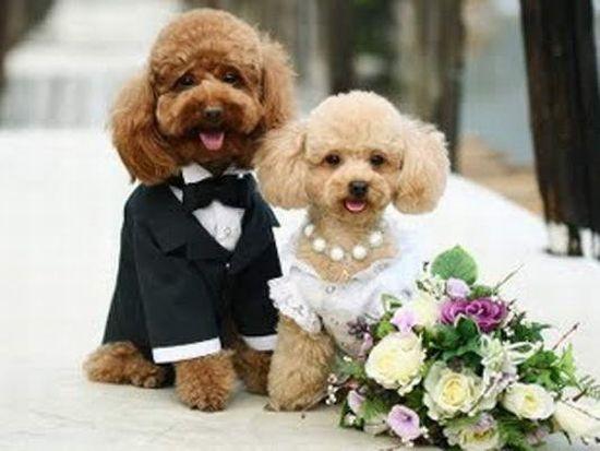 Wedding-dogs-in-dress