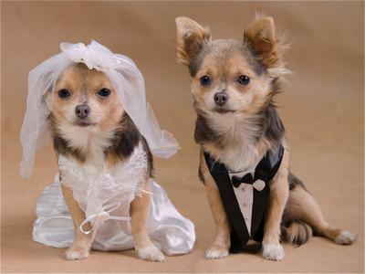 wedding-dress-DOGS