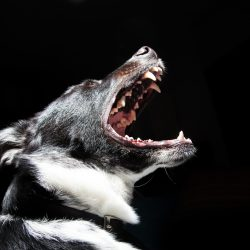 Dog Bite!