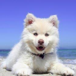 Puppy Biting
