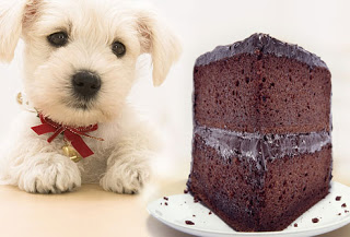 15 People Foods Your Dog Should Never Eat