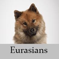 Eurasians
