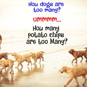 Dogs vs Chips