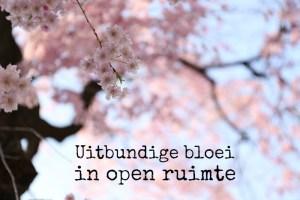 uitbundige bloei in open ruimte