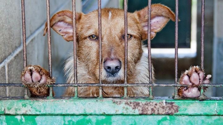 dogminancia_perros abandonados 1