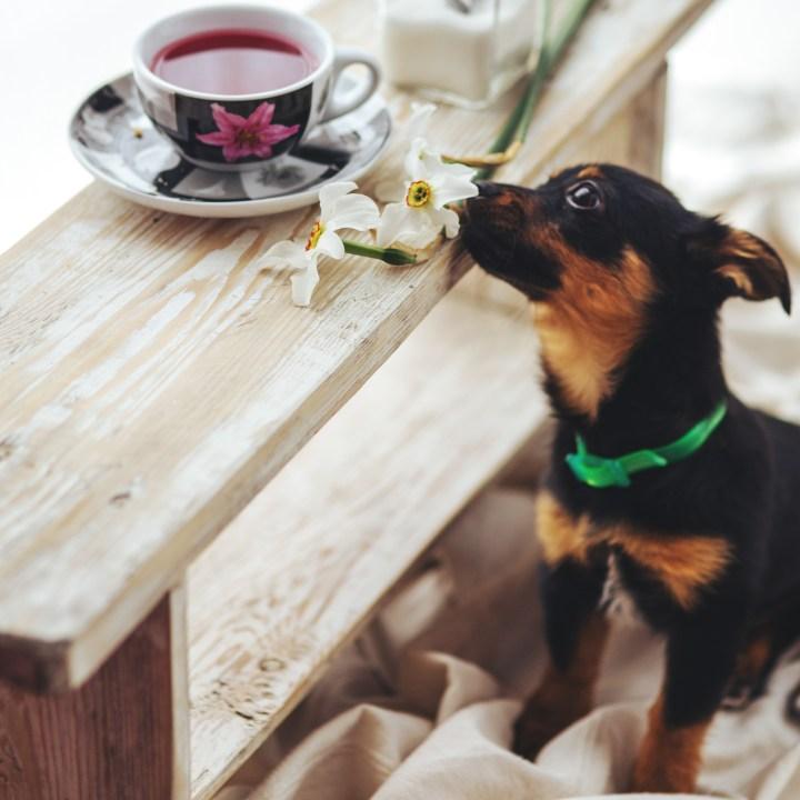 Dogminancia. Perro protege comida