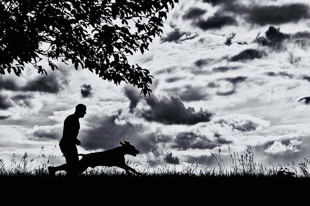 Perro prisa_dogminancia