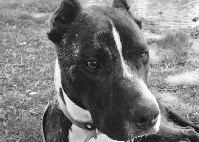 Saddy-Perro abandonado-dogminancia