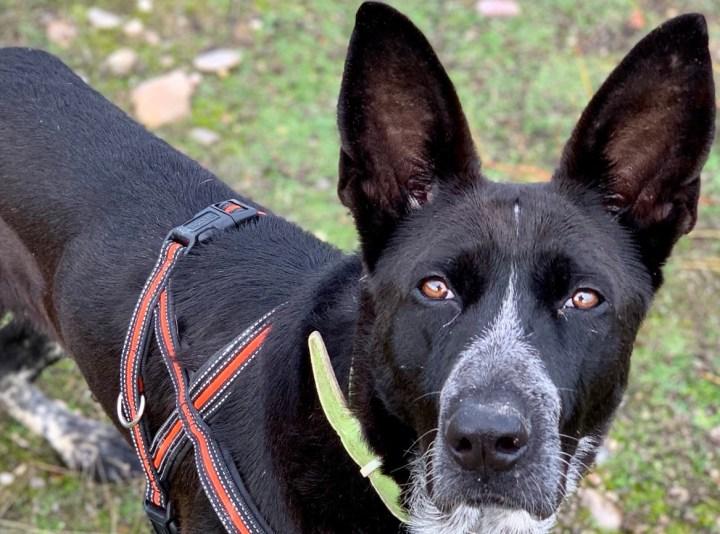 humanizar al perro-dogminancia