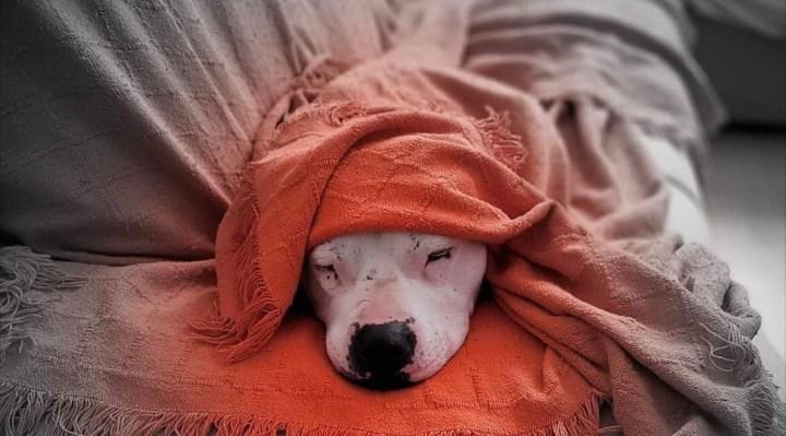 La cosificación de perro