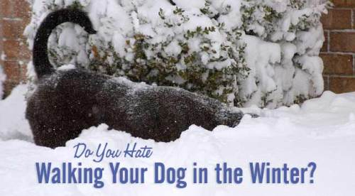 do-you-hate-walking-your-dog-in-the-winter