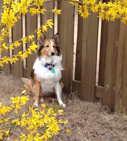 Sasha 3-20-16 posing for spring