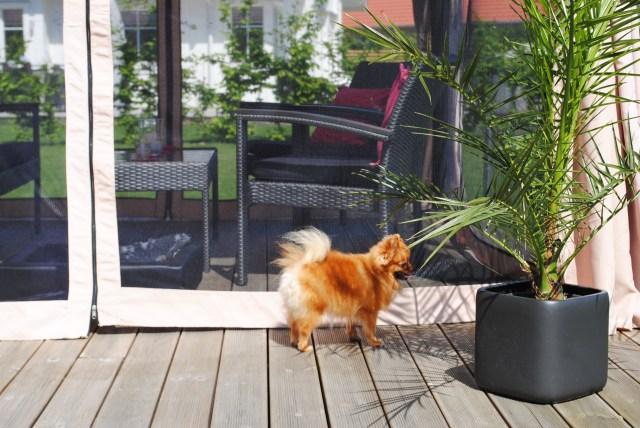 Chanel letar skugga bakom palmen